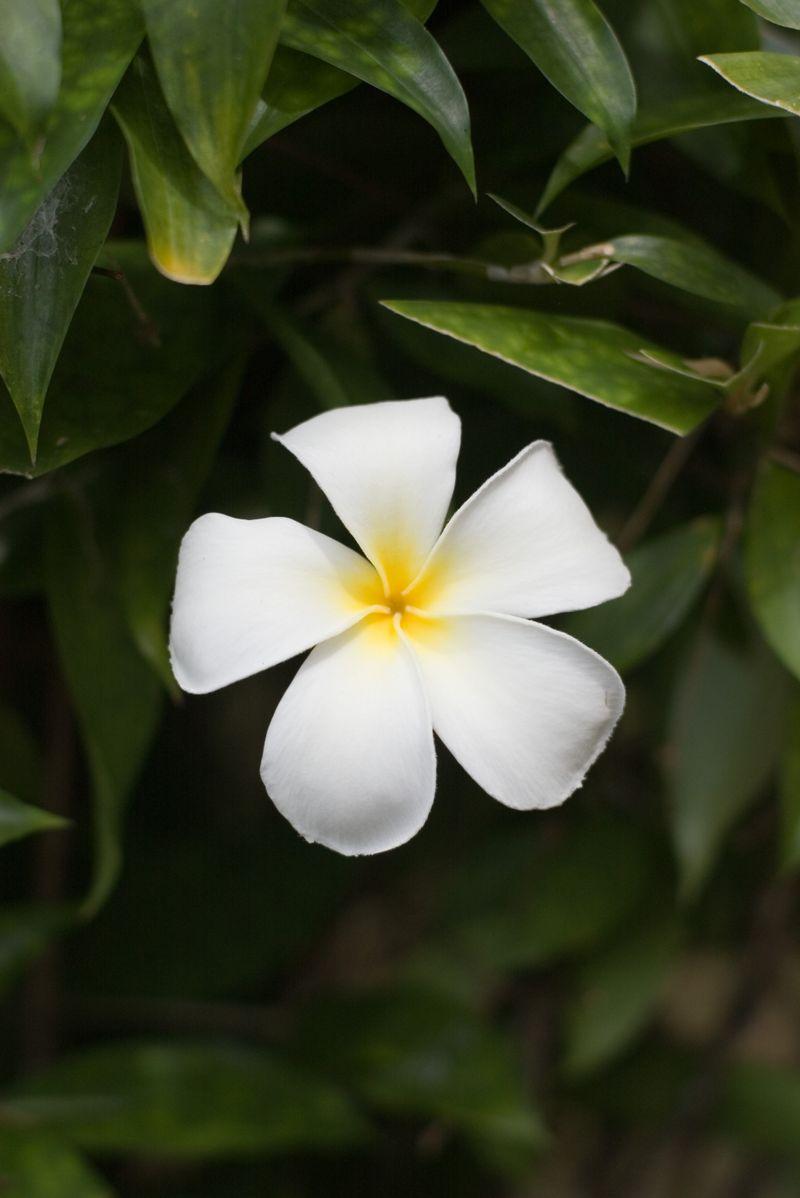 IMGP8906E Magnolia